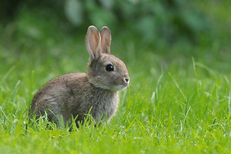 originele konijnen namen – correctboth.xyz