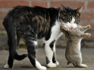 Kat en Konijntje – © Beverley Brouwer
