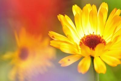 Bloemen – © Beverley Brouwer