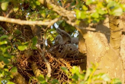 Buizerds Nest – © Marc Brouwer
